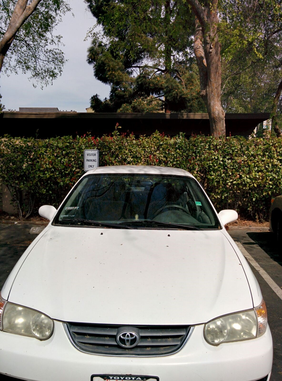 Toyota White Corolla Le 2001 Car Is For Sale Used Hatchback Make Model Year